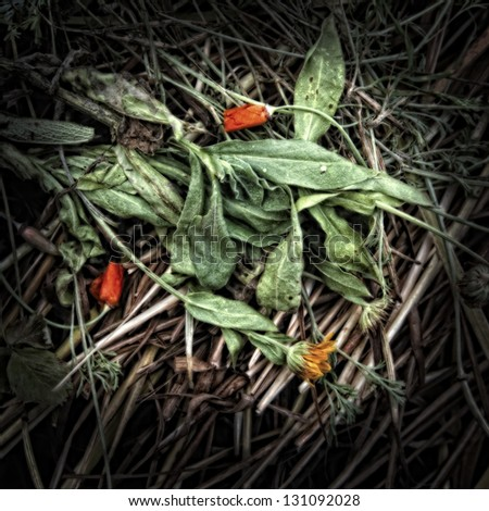 Wilting marigold flowers on a Compost Heap/Artistically alienated to create a grungy somber atmosphere. - stock photo