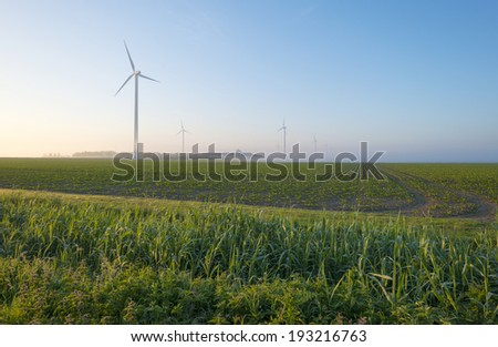 Wind farm in a hazy field at dawn