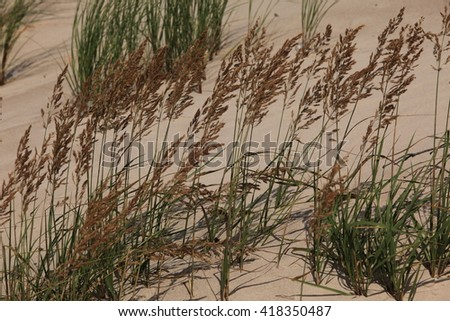 Wind, grass and sand.