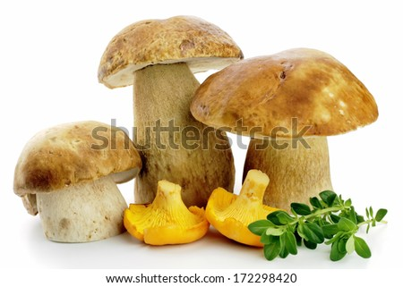 wind mushrooms, porcini and Chanterelle isolated on white background - stock photo