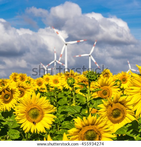 Wind power plants behind a field of sunflowers