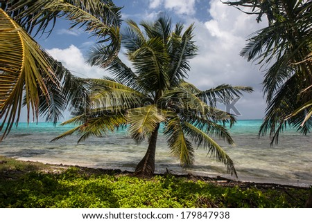Wind rustles the fronds of coconut palms growing on an idyllic, sandy caye in the Caribbean Sea.