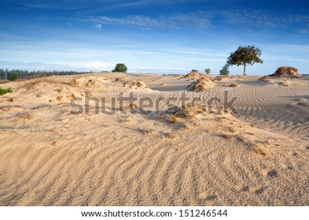 wind texture on sand dunes, Drents-Friese Wold, Netherlands