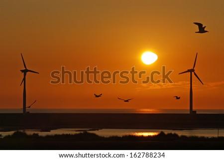Wind turbine farm with birds flying at sunset - stock photo