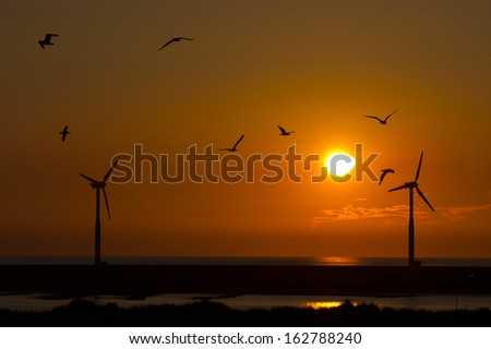 Wind turbine farm with birds flying during sunset