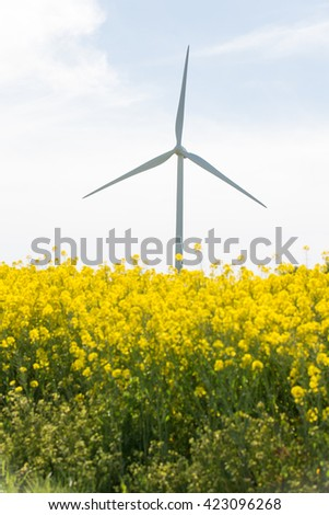 wind turbine in colza field