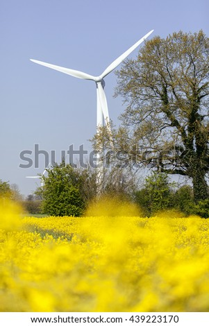 wind turbine - rape field