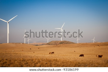 Wind turbines and bulls in Andalusia, Spain.