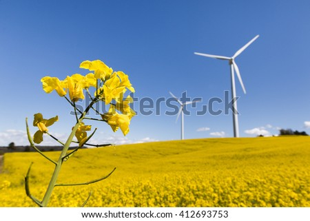 Wind Turbines and Flower Fields on a Sunny Day