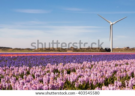Wind turbines producing electricity in the flower fields of The Netherlands on a clear and sunny spring morning / Spring flower power - stock photo