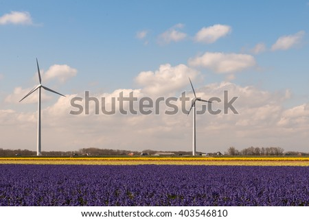 Wind turbines producing electricity in the flower fields of The Netherlands on a clear and sunny spring morning / Spring flower power