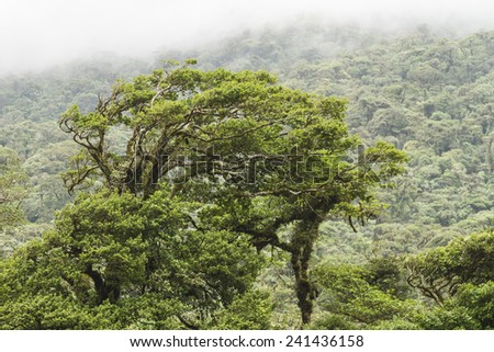 Windblown treetops in the rainforest of the Rio Celeste Valley in Volcan Tenorio National Park, Costa Rica - stock photo