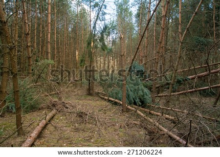 Windbreaks - stock photo