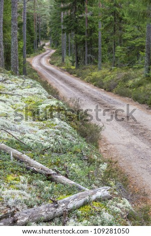 Winding dirt road through the forest - stock photo