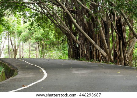 Winding forest road between