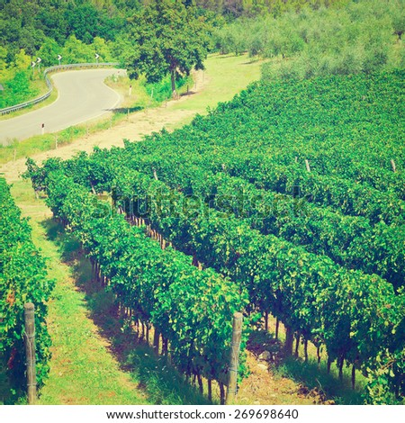 Winding Paved Road between Vineyards in the Tuscany, Instagram Effec - stock photo