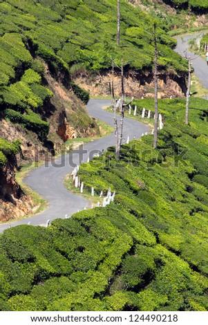 winding road between tea plantations in Kerala India - stock photo