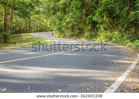 winding road in forest.