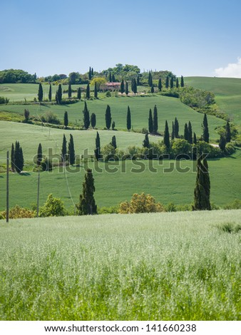 Winding road lined with cypresses in Tuscany - stock photo