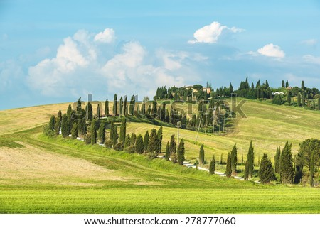 Winding road surrounded by cypress trees in the summer sunny day. - stock photo