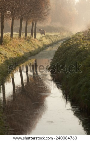 Winding stream with Pony in a field - stock photo
