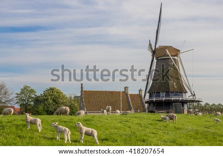 Windmill and sheep on a dike in Medemblik, Holland - stock photo