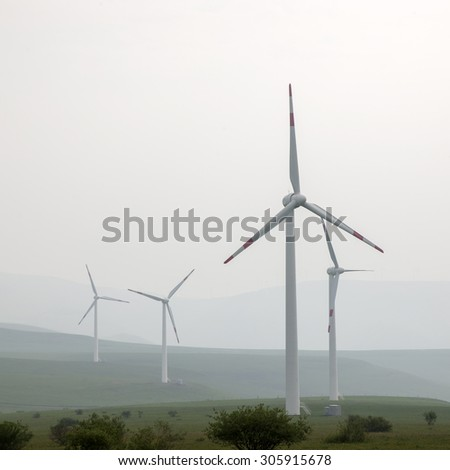 Windmill grass  - stock photo