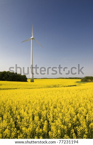 Windmill in the field of yellow rapeseed, spring season