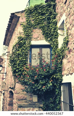 Window and climbing plant