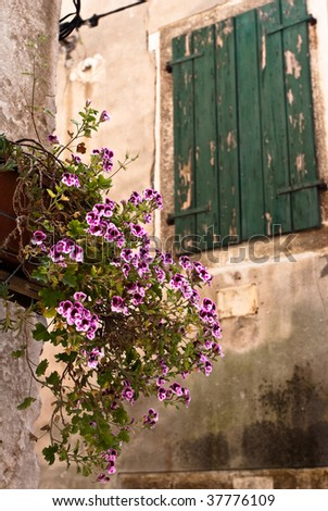 Window and flowerpot on an old building in Rovinj town, Croatia