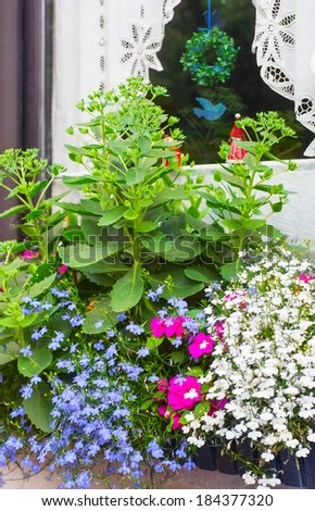 Window box with blue edging lobelia and butterfly stone crop plants - stock photo