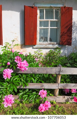 Window of old rural house and a flower bed with peonies