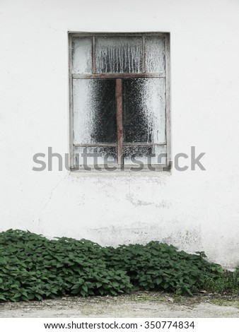 window on a white wall with grass
