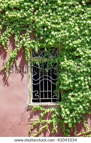 Window on an old house covered with ivy - stock photo