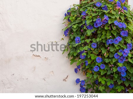 Window on white building, surrounded by blue flowers - stock photo