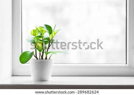 Window, sill, clean. - stock photo