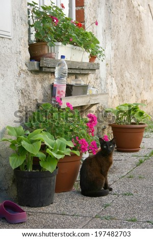 Window sill of an old farm house, colorful flowers and shoes in front with a cat