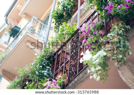 Window sill with flowers on metal balcony railing - stock photo