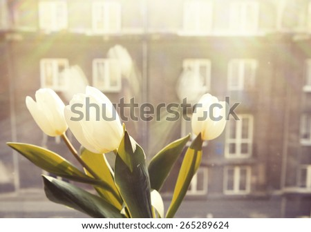 Window with tulip flowers over olt town street. - stock photo