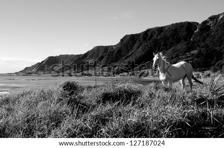 Windswept white horse on the coast at East Cape on New Zealand's North Island