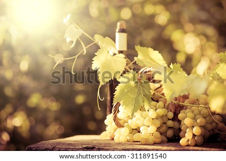Wine bottle and grapes of vine in autumn - stock photo