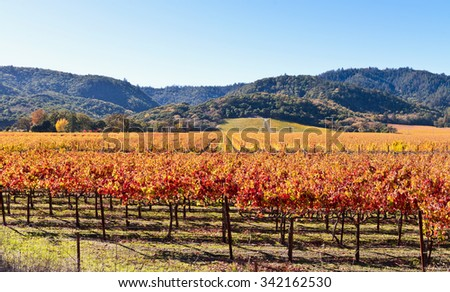 Wine Country, Napa Valley Vineyards in Autumn - stock photo