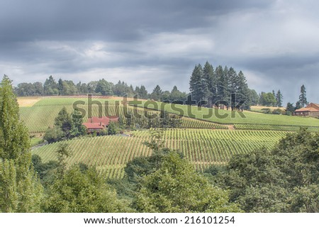 Wine Country Scenic Scenic view of a hillside in wine country.  - stock photo
