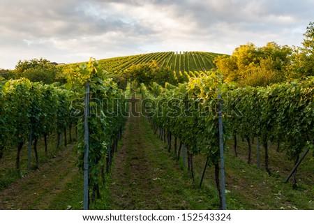 Wine fields in stuttgart germany - stock photo