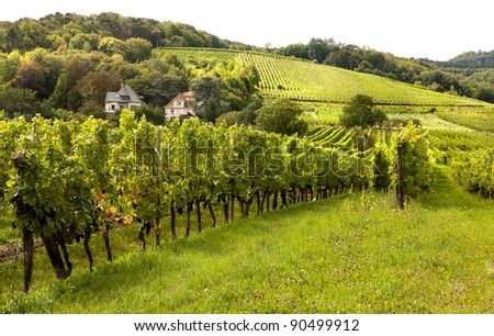 Wine hills and vineyards in the Alsace region in France - stock photo