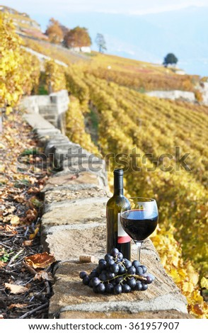 Wine on the terrace vineyard in Lavaux region, Switzerland