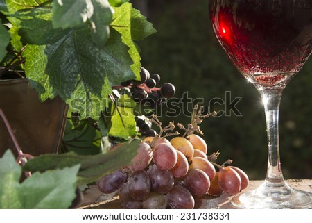 Wine sparkles in the late afternoon sun/Sparkling Red Wine?Grapes and leaves surround a glass of sparkling red wine in a glass. - stock photo