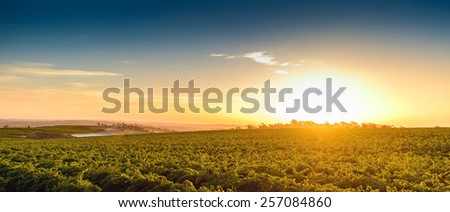 Wine valley at warm summer sunset - stock photo