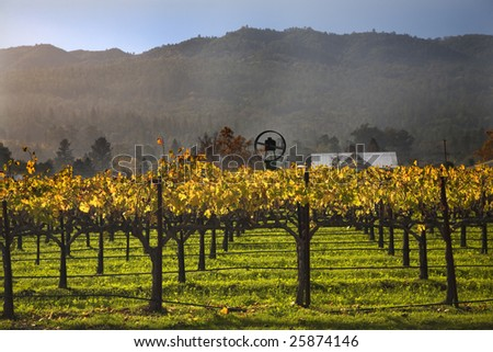 Wine Vines Yellow Leaves Fall Vineyards Napa California - stock photo