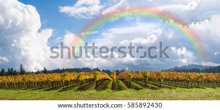 Wine Vineyards, Rows, in Autumn, Fall Colors Sky, Clouds, Rainbow, Panoramic